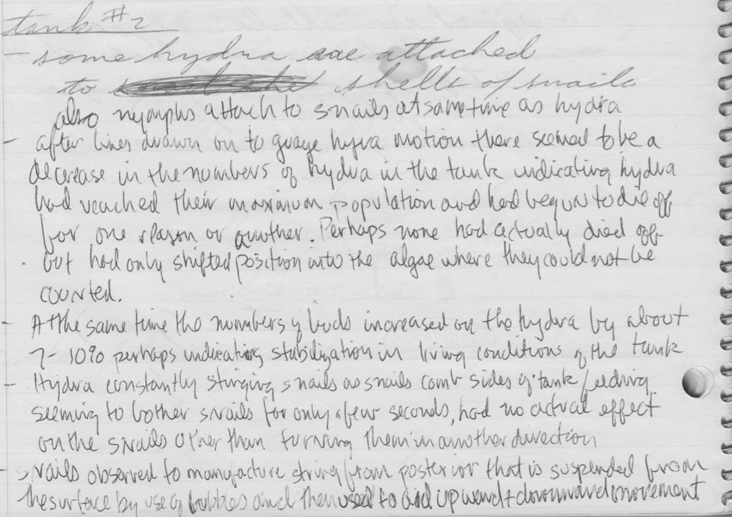 GregoryBateson-JeffBloompondobservationlogComments8-12-1975.jpg
